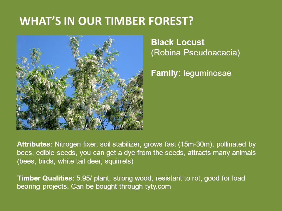 WHAT'S IN OUR TIMBER FOREST