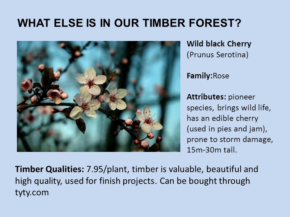 WHAT ELSE IS IN OUR TIMBER FOREST