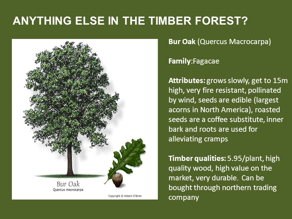 ANYTHING ELSE IN THE TIMBER FOREST