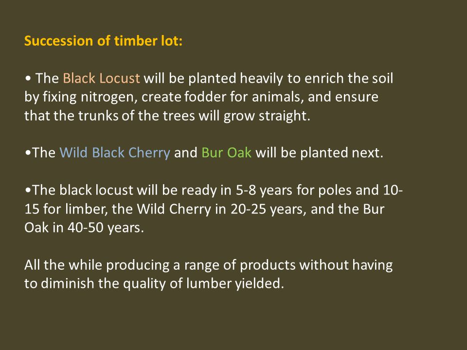 Succession of timber lot: