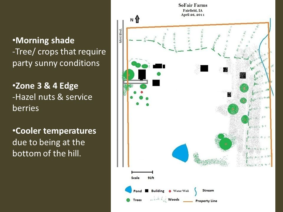 Morning shade -Tree/ crops that require party sunny conditions. Zone 3 & 4 Edge. -Hazel nuts & service berries.