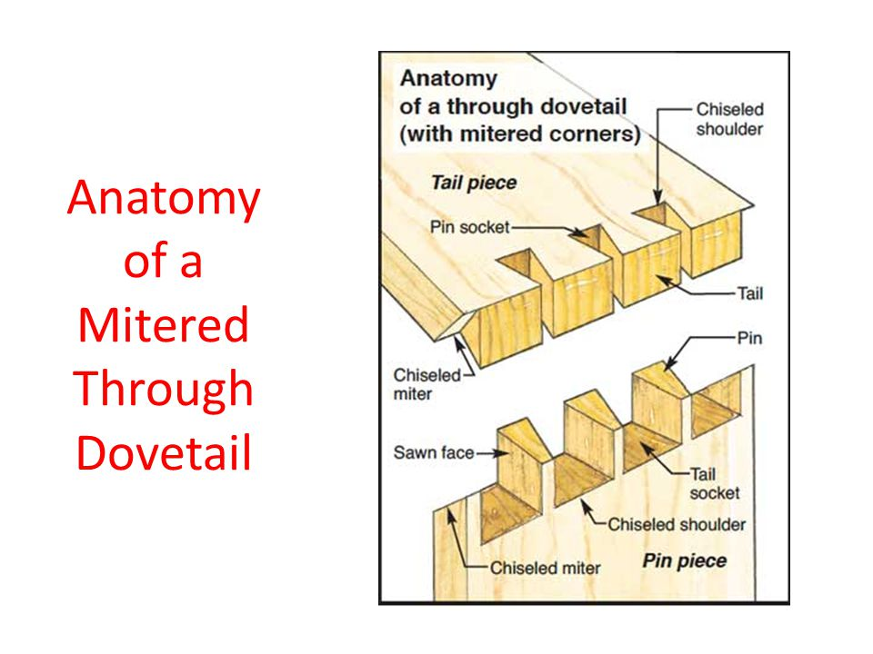 Anatomy of a Mitered Through Dovetail