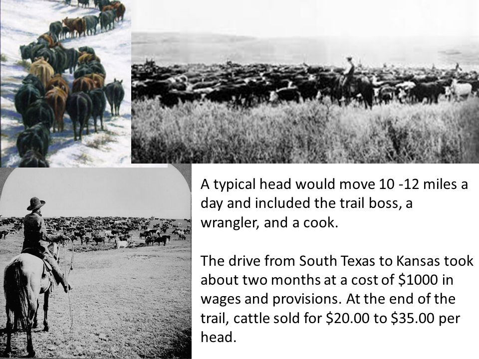 A typical head would move 10 -12 miles a day and included the trail boss, a wrangler, and a cook.