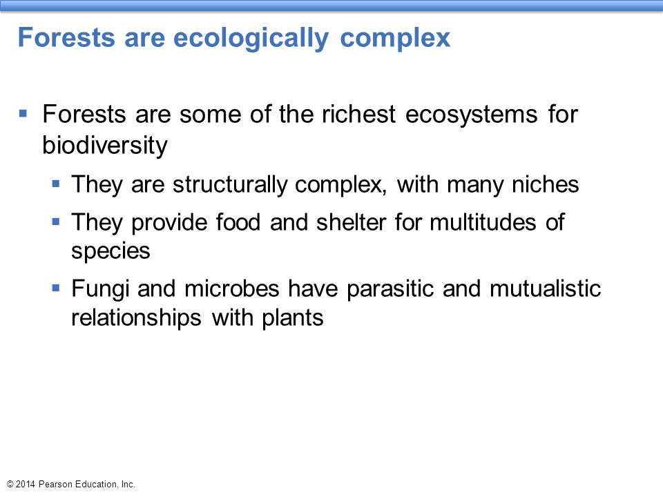 Forests are ecologically complex