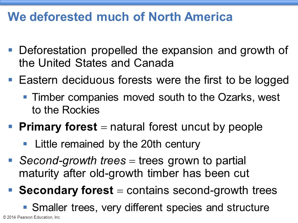 We deforested much of North America