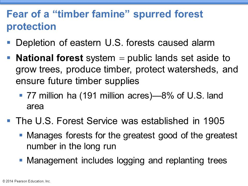 Fear of a timber famine spurred forest protection