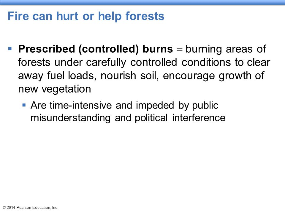 Fire can hurt or help forests