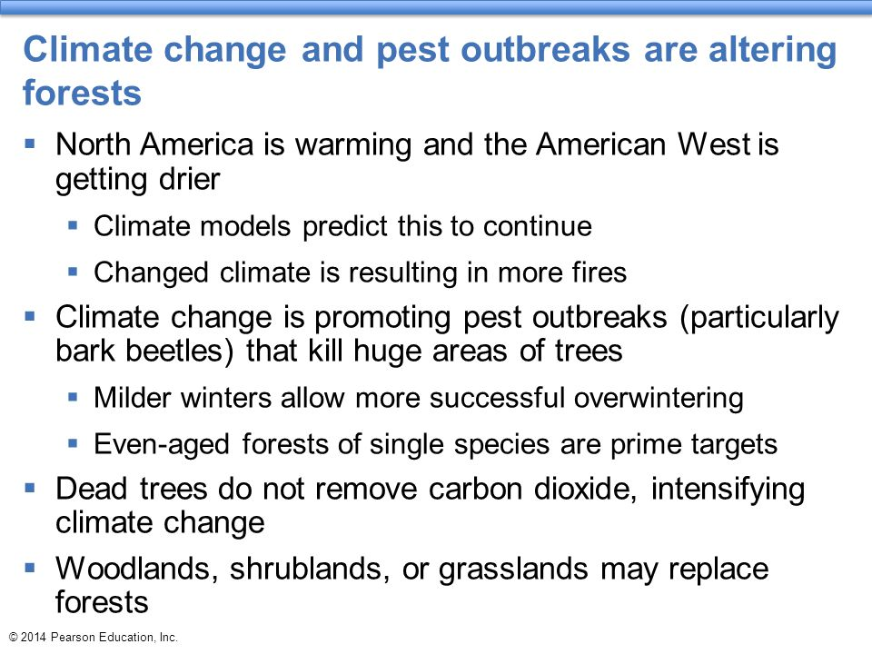 Climate change and pest outbreaks are altering forests