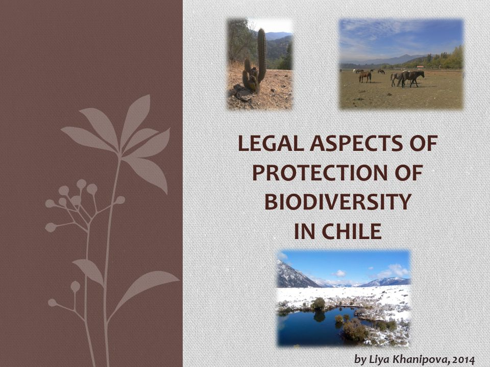 Legal aspects of protection of biodiversity in chile