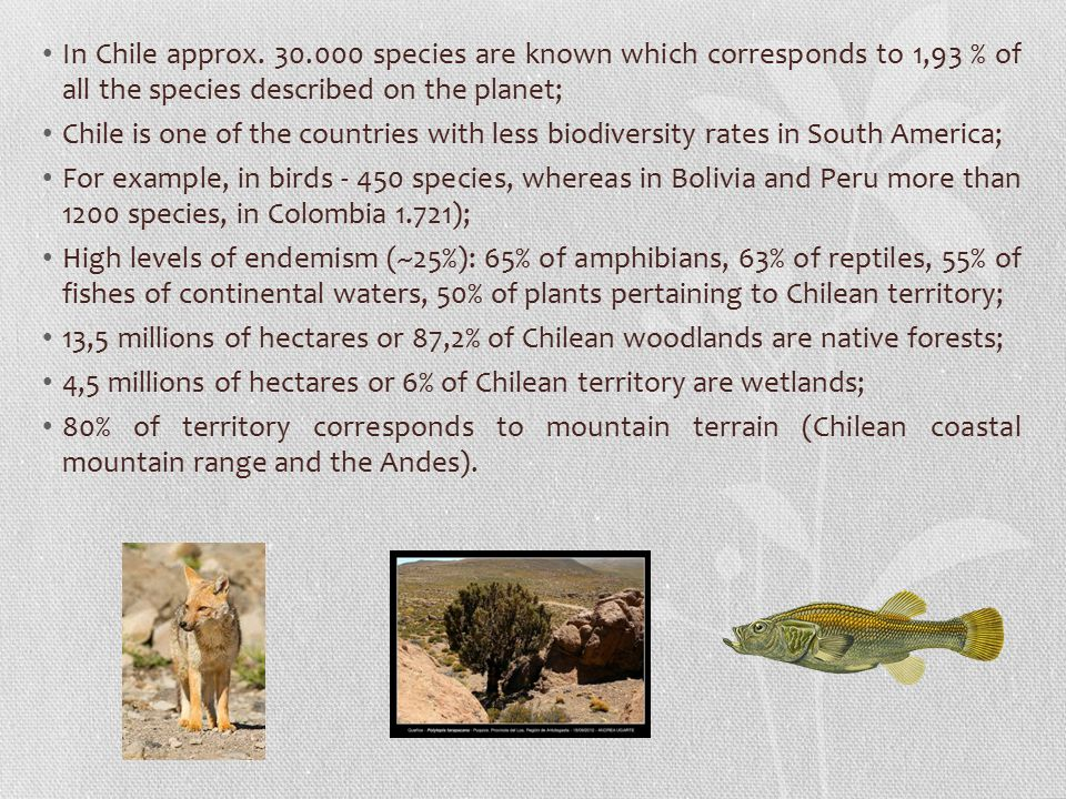 In Chile approx. 30.000 species are known which corresponds to 1,93 % of all the species described on the planet;
