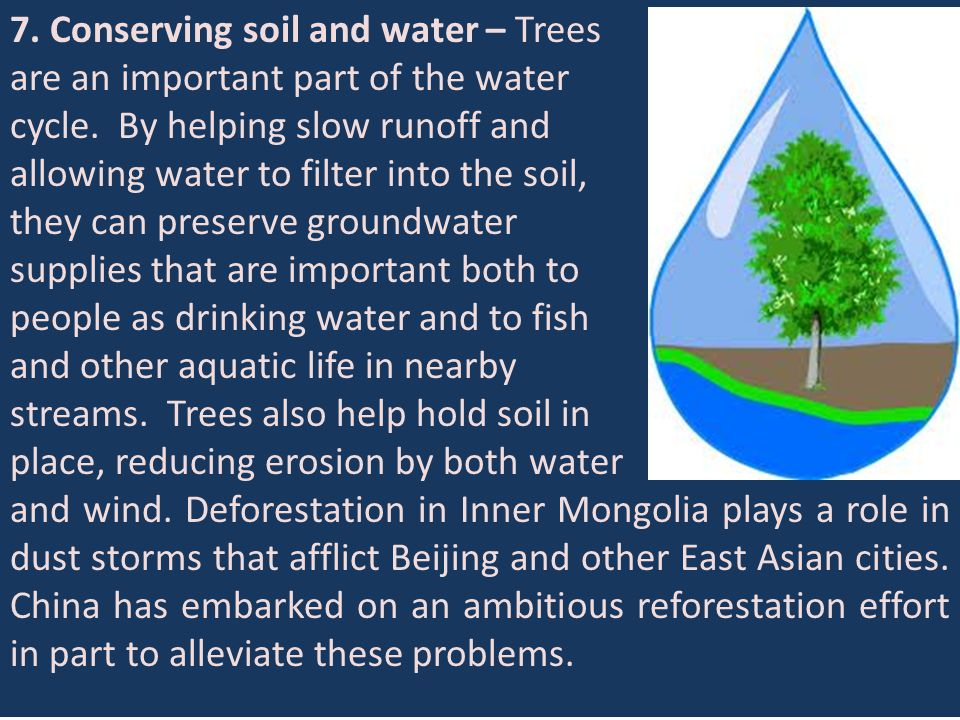 7. Conserving soil and water – Trees