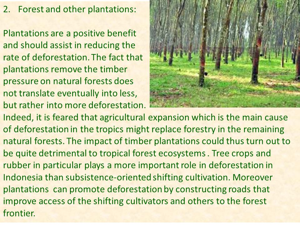Forest and other plantations: