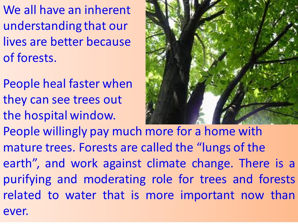 We all have an inherent understanding that our. lives are better because. of forests. People heal faster when.
