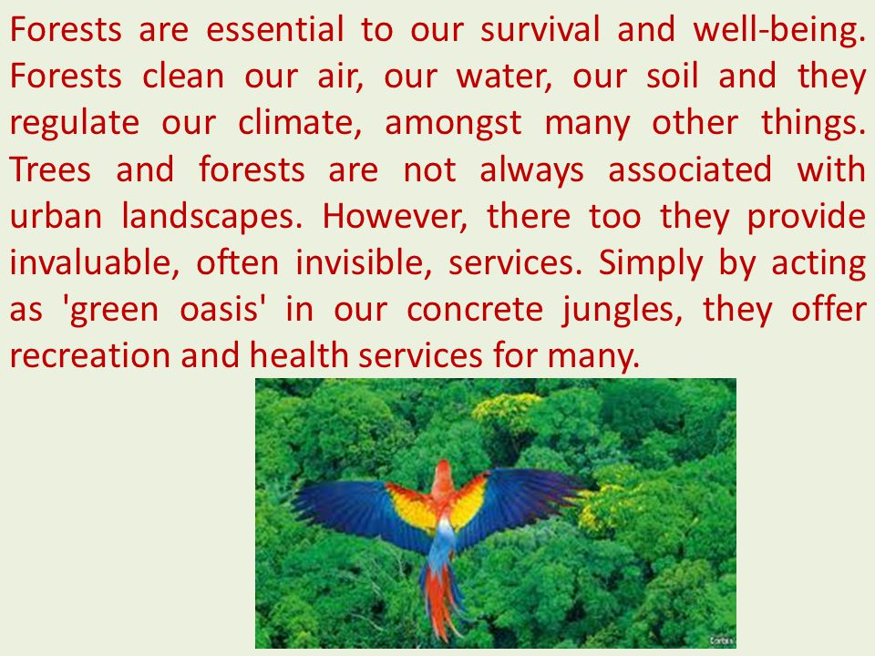 Forests are essential to our survival and well-being