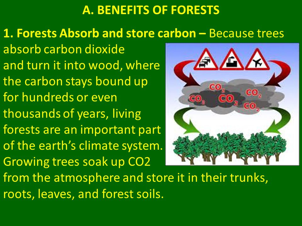 A. BENEFITS OF FORESTS 1. Forests Absorb and store carbon – Because trees absorb carbon dioxide. and turn it into wood, where.