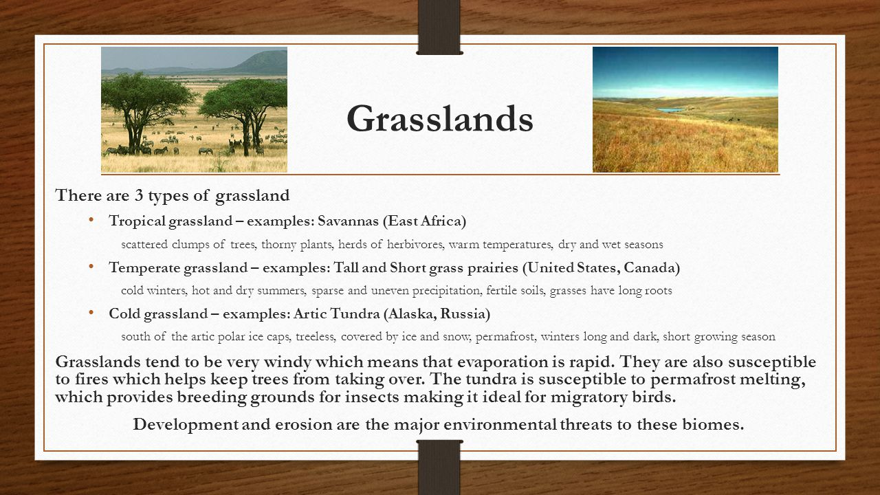Grasslands There are 3 types of grassland