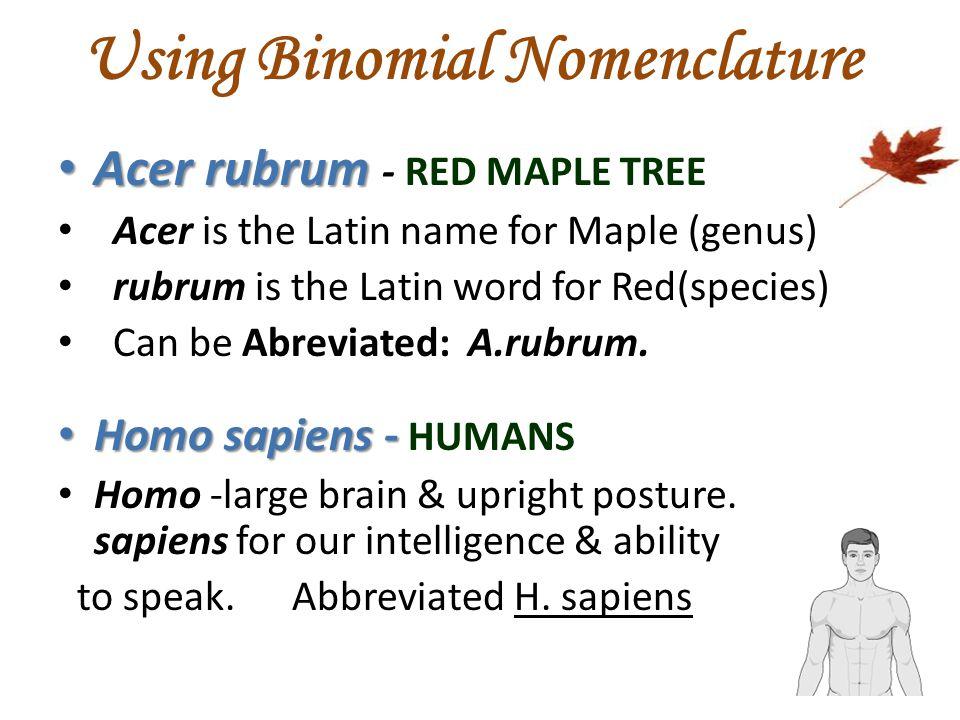 Using Binomial Nomenclature