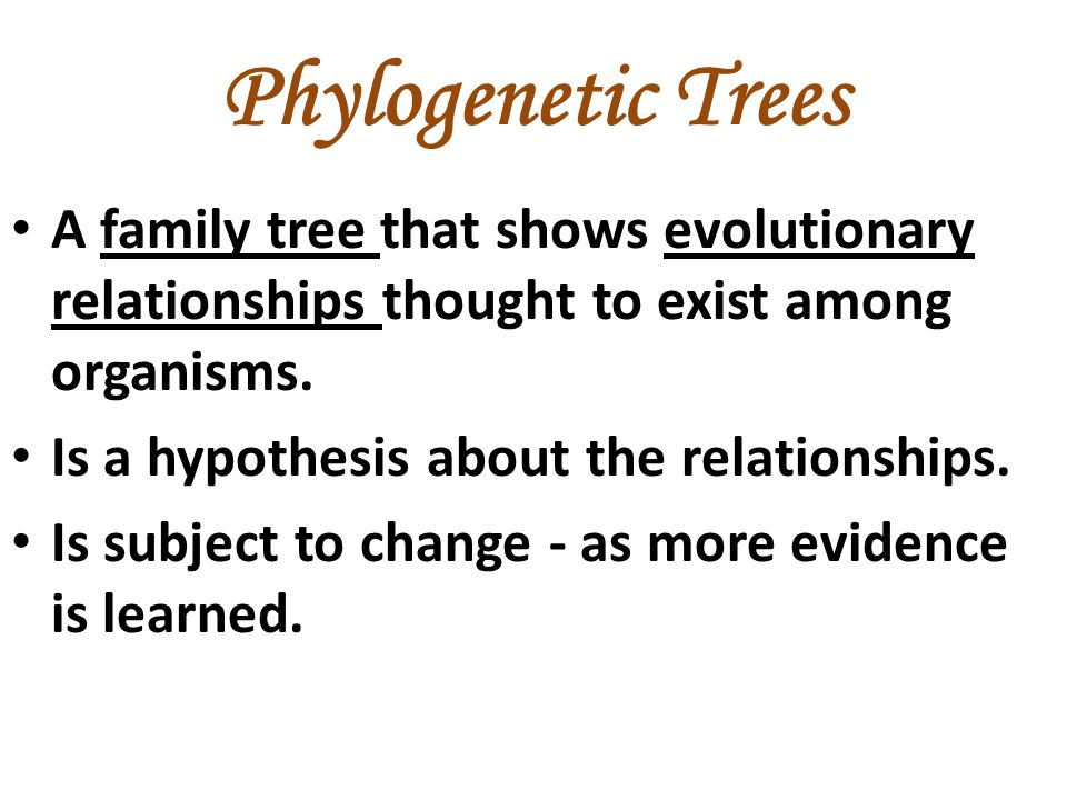 Phylogenetic Trees A family tree that shows evolutionary relationships thought to exist among organisms.