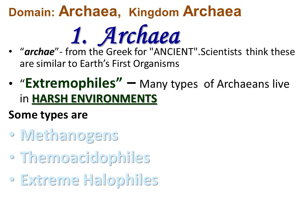 Methanogens Themoacidophiles Extreme Halophiles 1. Archaea