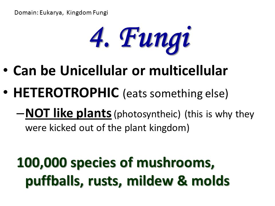 4. Fungi Can be Unicellular or multicellular
