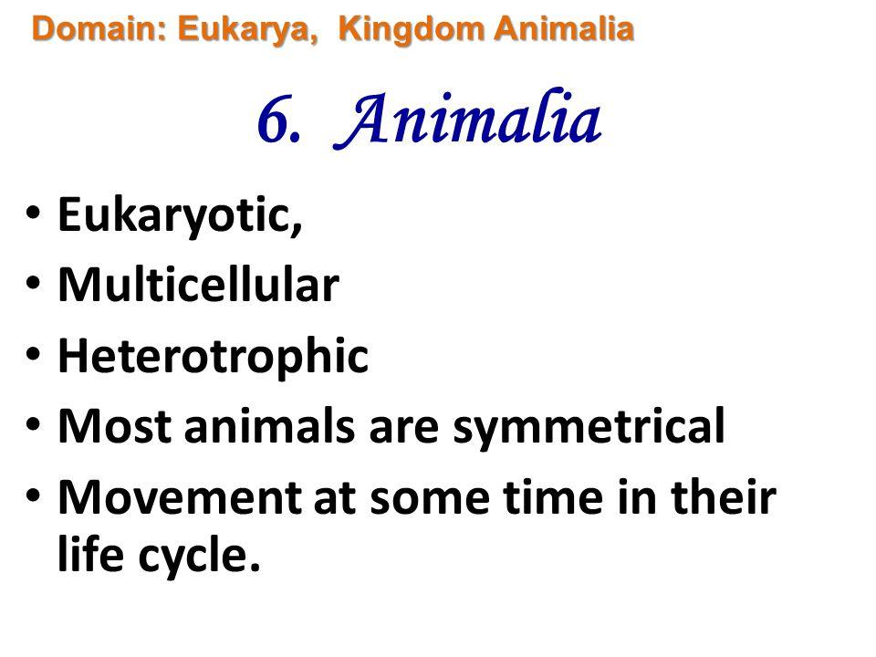 6. Animalia Eukaryotic, Multicellular Heterotrophic