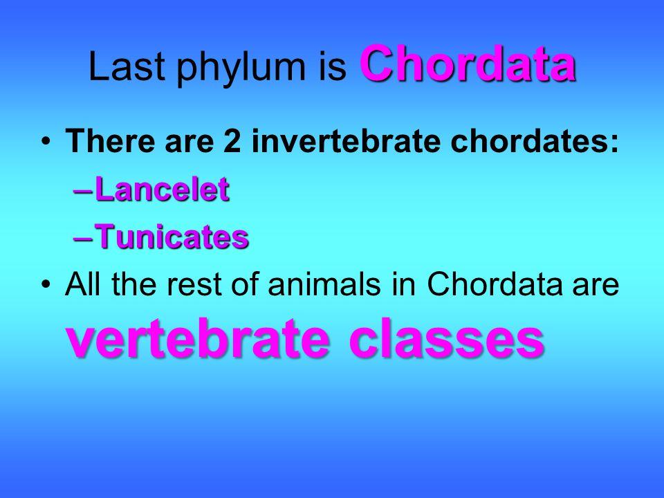 Last phylum is Chordata