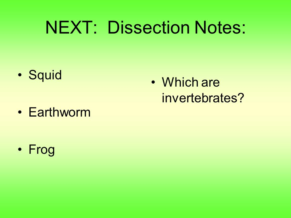 NEXT: Dissection Notes: