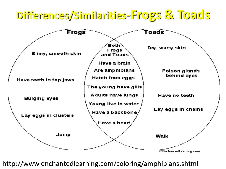 Differences/Similarities-Frogs & Toads