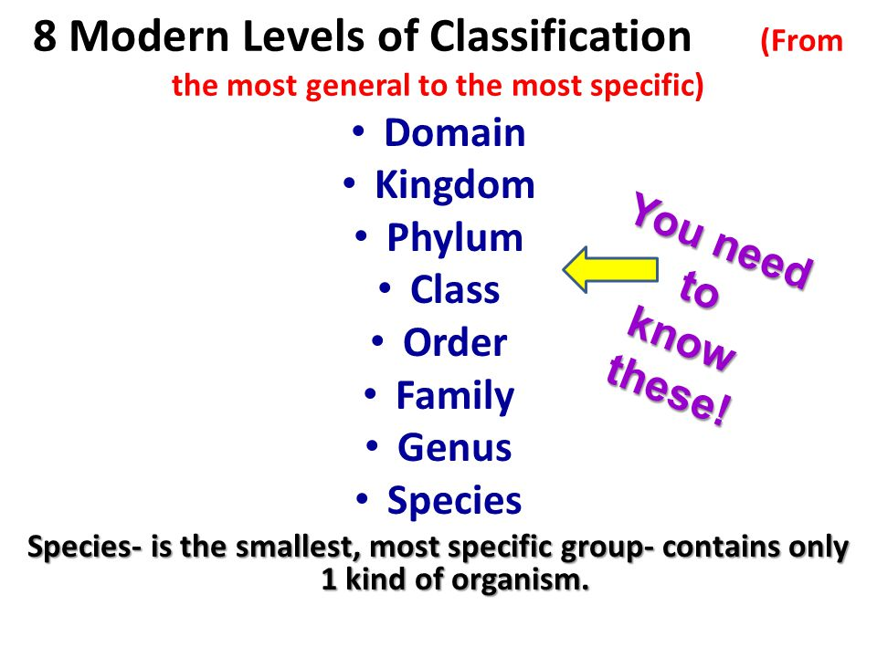 classification chapter 17 taxonomy 6 kingdoms dissection