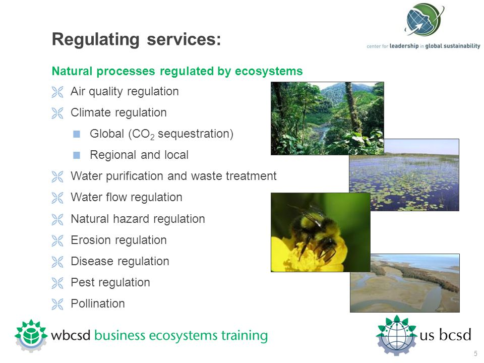 Regulating services: Natural processes regulated by ecosystems