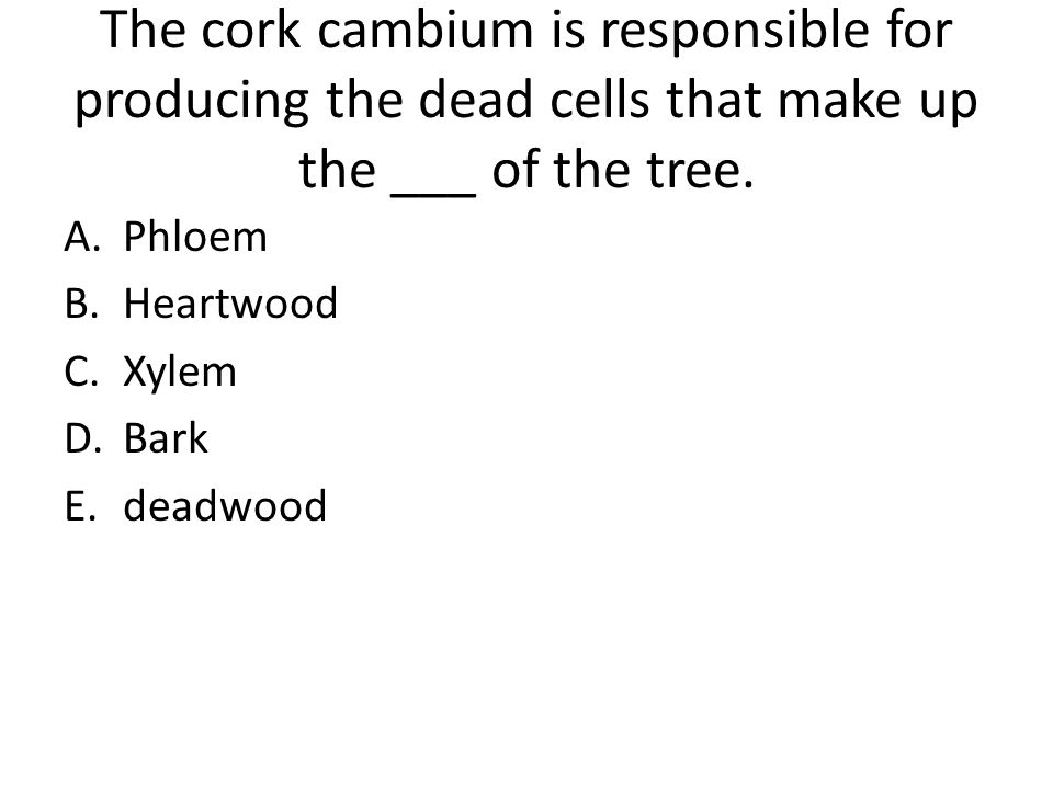 The cork cambium is responsible for producing the dead cells that make up the ___ of the tree.