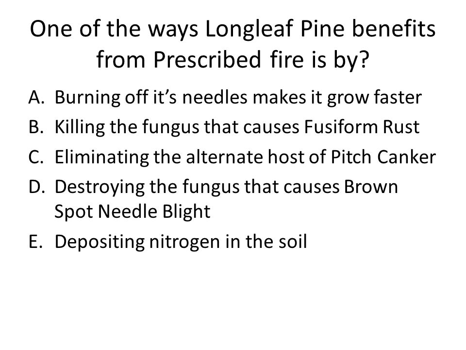 One of the ways Longleaf Pine benefits from Prescribed fire is by