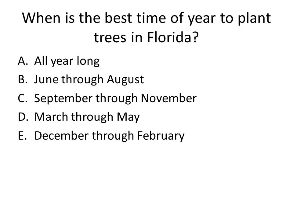 When is the best time of year to plant trees in Florida