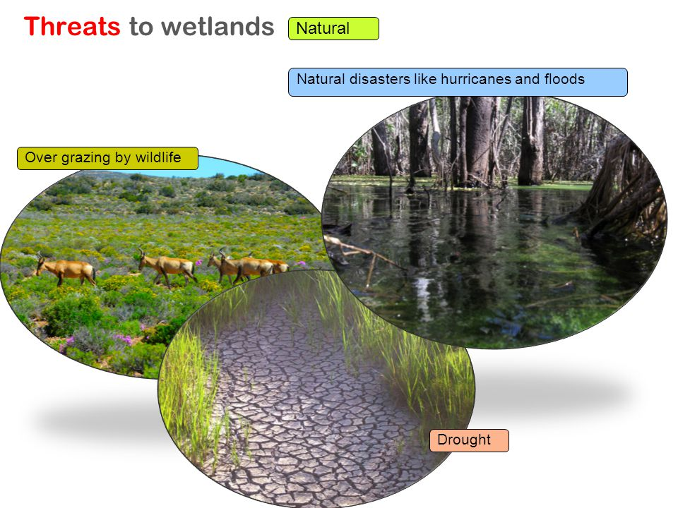 Threats to wetlands Natural