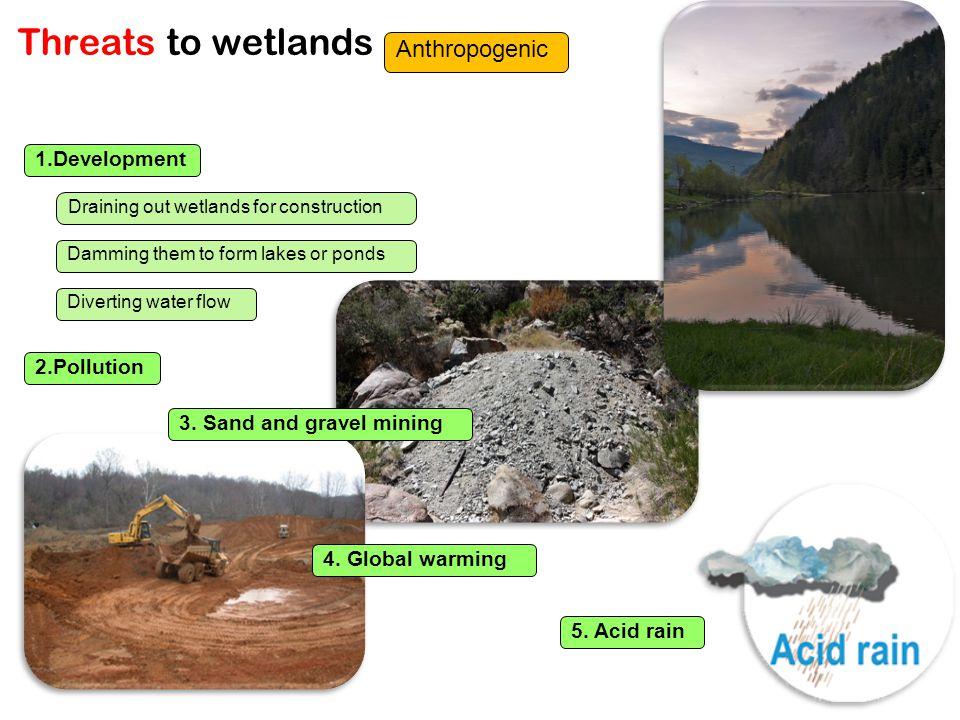Threats to wetlands Anthropogenic 1.Development 2.Pollution