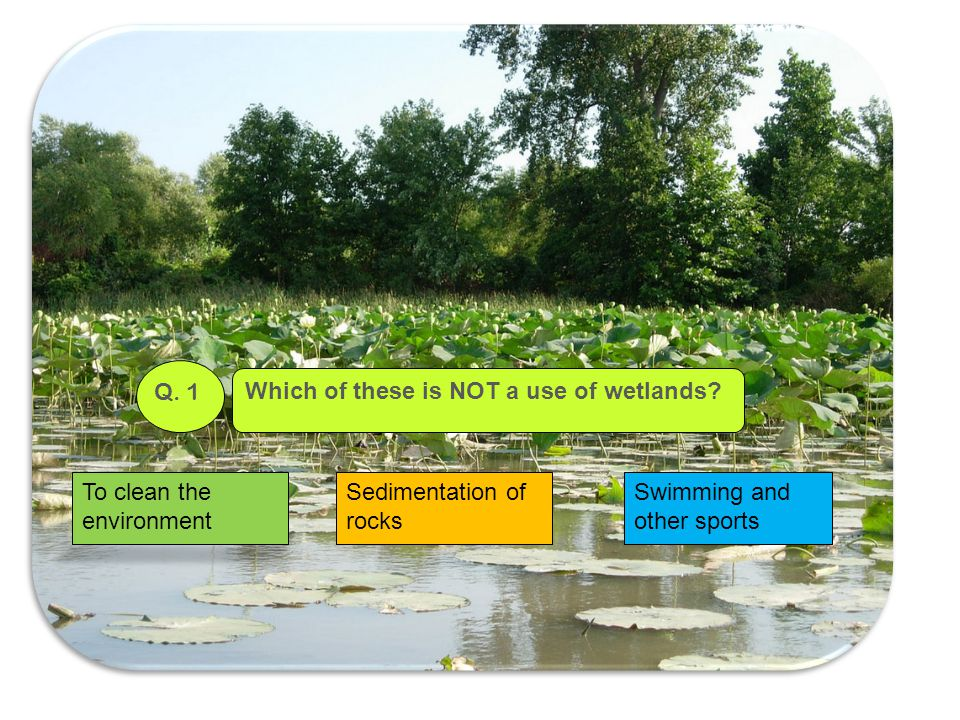 Q. 1 Which of these is NOT a use of wetlands. To clean the environment.