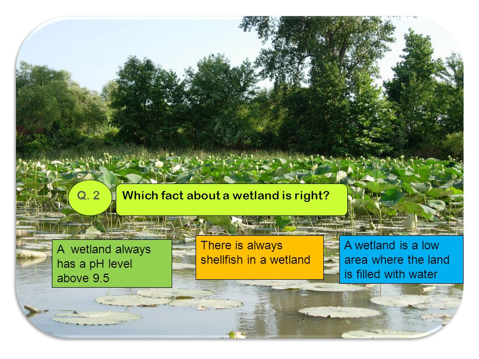 Q. 2 Which fact about a wetland is right There is always shellfish in a wetland. A wetland is a low area where the land is filled with water.