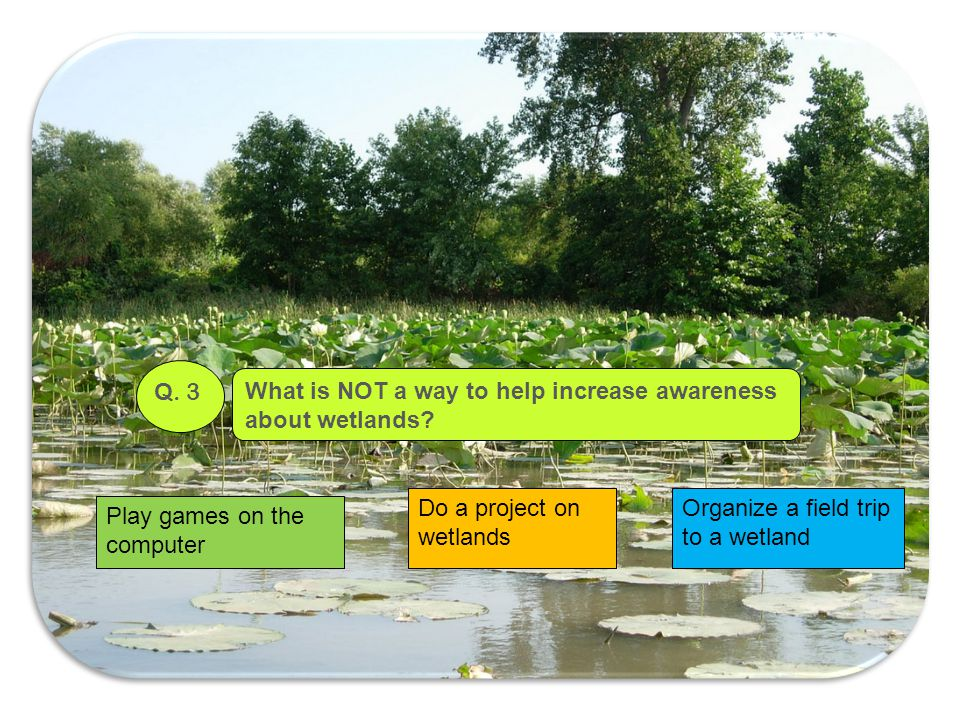 Q. 3 What is NOT a way to help increase awareness. about wetlands Do a project on wetlands. Organize a field trip to a wetland.