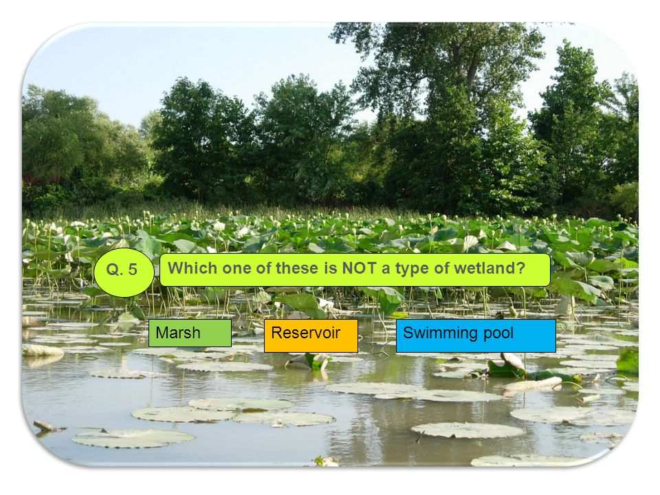 Q. 5 Which one of these is NOT a type of wetland Marsh Reservoir Swimming pool