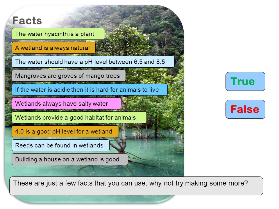 Facts The water hyacinth is a plant. A wetland is always natural. The water should have a pH level between 6.5 and 8.5.