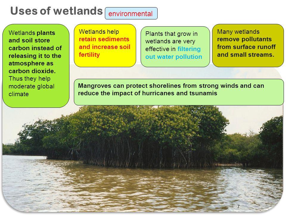 Uses of wetlands environmental