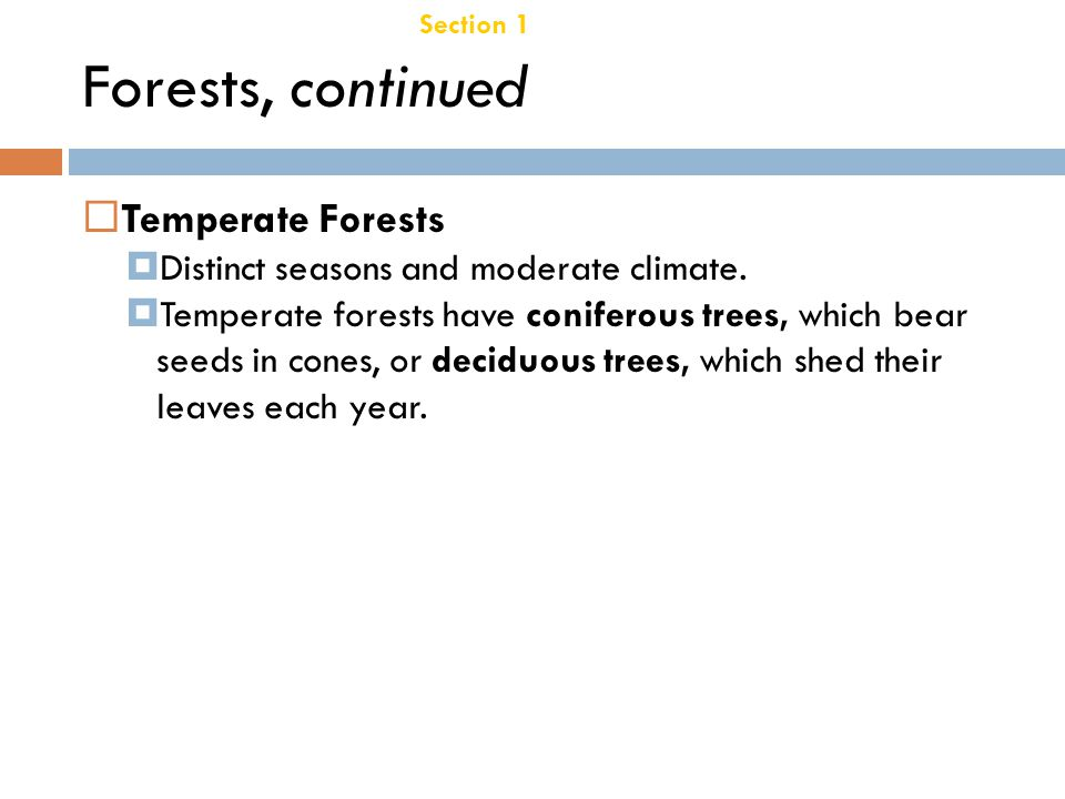 Forests, continued Temperate Forests Chapter 21