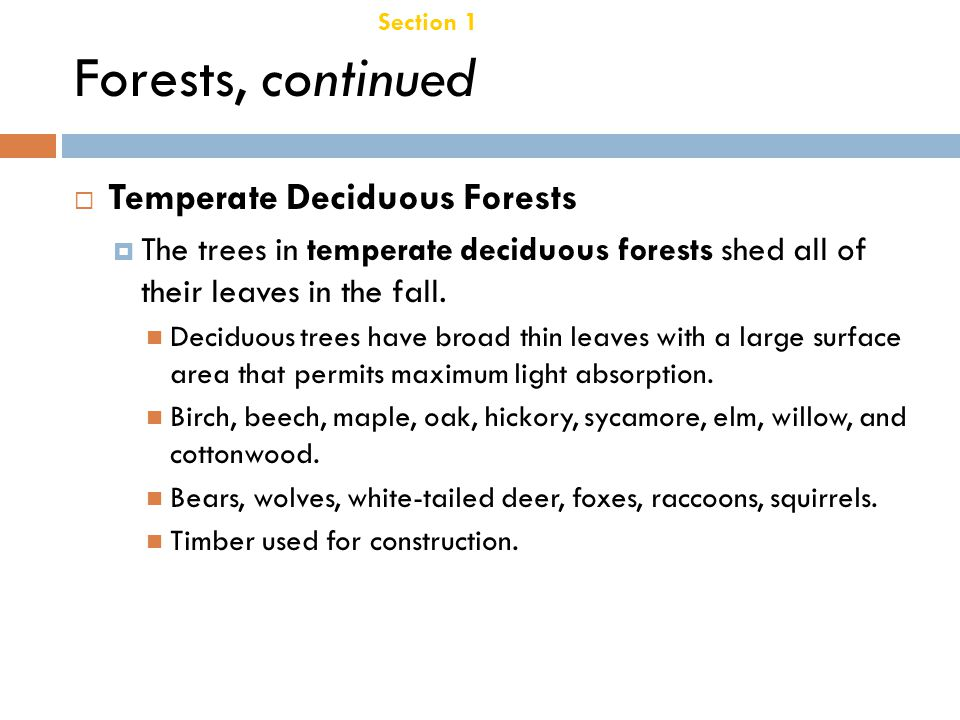 Forests, continued Temperate Deciduous Forests Chapter 21