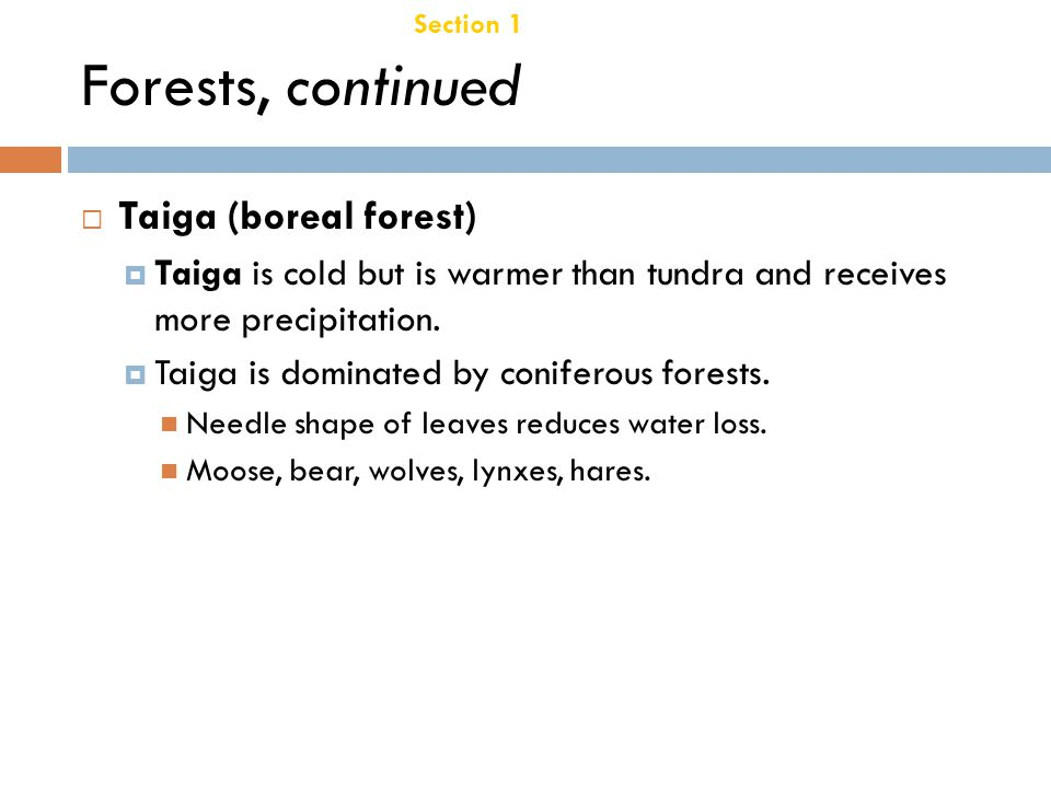 Forests, continued Taiga (boreal forest) Chapter 21