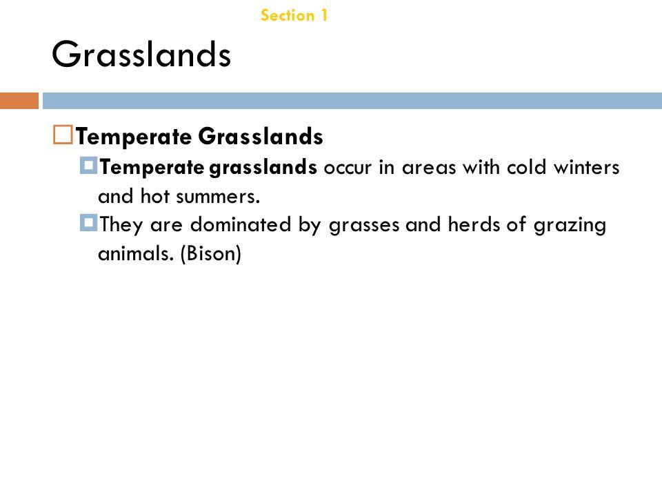 Grasslands Temperate Grasslands Chapter 21