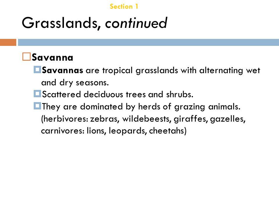 Grasslands, continued Savanna Chapter 21