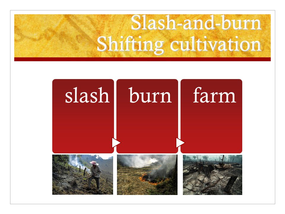 Slash-and-burn Shifting cultivation