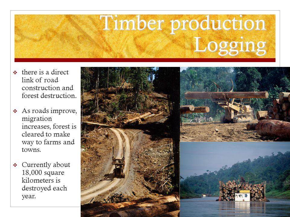 Timber production Logging