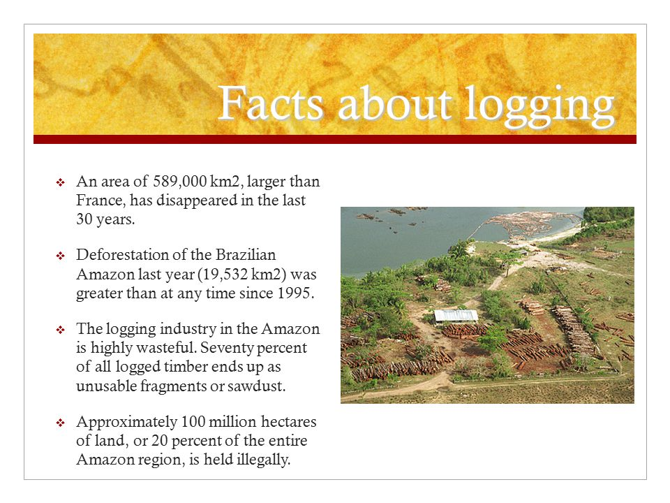 Facts about logging An area of 589,000 km2, larger than France, has disappeared in the last 30 years.