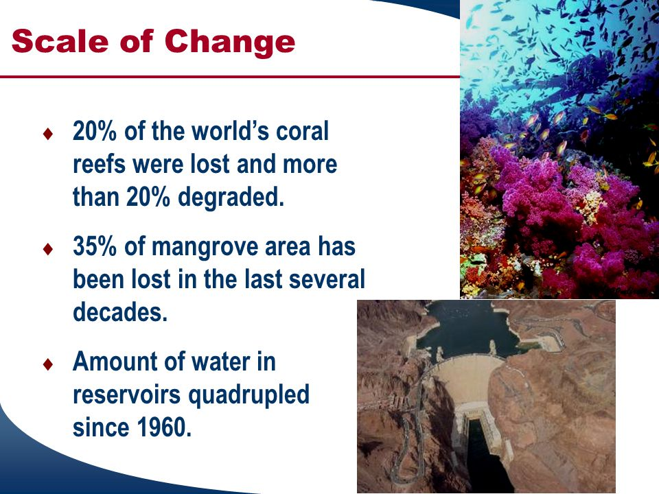 Scale of Change 20% of the world's coral reefs were lost and more than 20% degraded. 35% of mangrove area has been lost in the last several decades.
